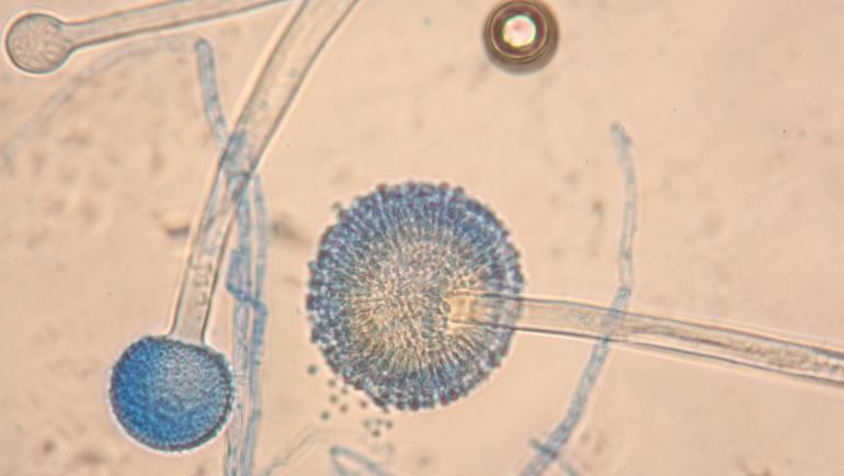 Mycology Teaching Scheme: